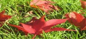 Leaf Pickup Time Rochester Ny Twigs Lawn Care