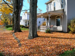 Leaf Pickup and Removal services are available