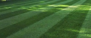 Twigs lawn Care offers quality lawn mowing's in Rochester, NY