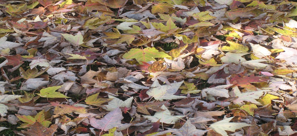 Fall Cleanup time is here.  Need a leaf removal service?